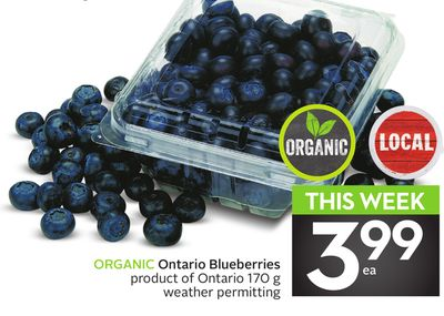 Organic Ontario Blueberries