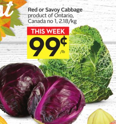 Red or Savoy Cabbage