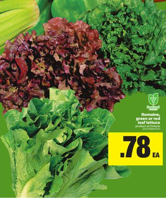 Romaine - Green Or Red Leaf Lettuce
