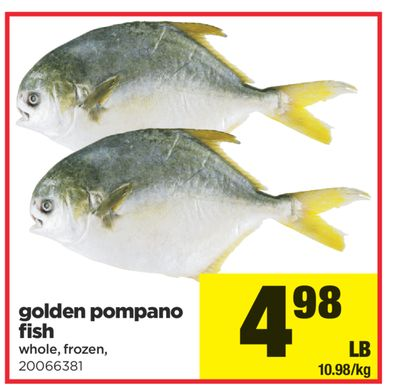 Golden pompano fish on sale for Picture of pompano fish