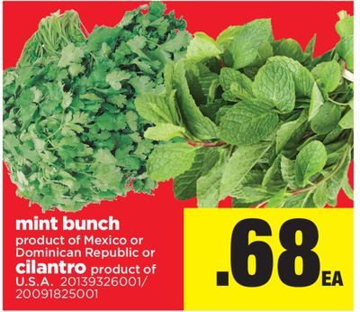 Mint Bunch Or Cilantro