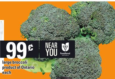 Large Broccoli Product Of Ontario