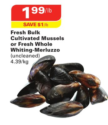 Fresh Bulk Cultivated Mussels or Fresh Whole Whiting-merluzzo