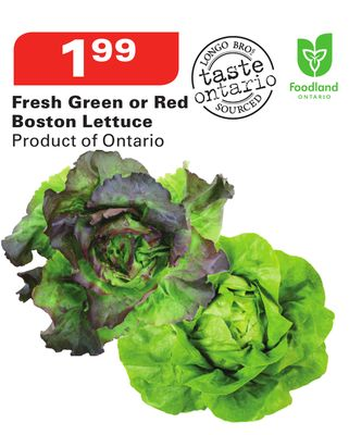 Fresh Green or Red Boston Lettuce