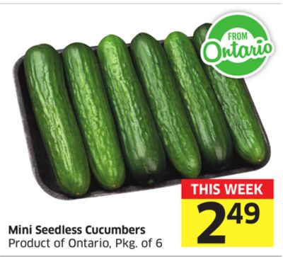 Mini Seedless Cucumbers Product of Ontario - Pkg of 6