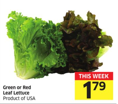 Green or Red Leaf Lettuce Product of USA