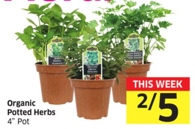 Organic Potted Herbs 4'' Pot