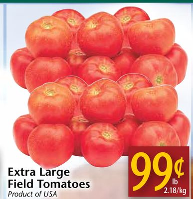 Extra Large Field Tomatoes