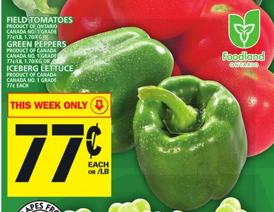 Field Tomatoes Or Green Peppers Or Iceberg Lettuce