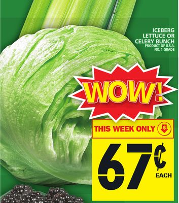 Iceberg Lettuce Or Celery Bunch