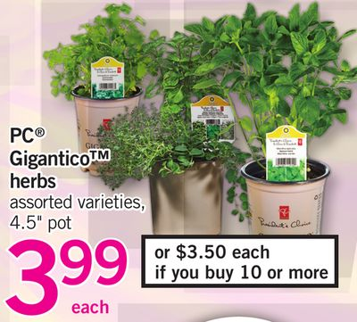PC Gigantico Herbs - 4.5'' Pot