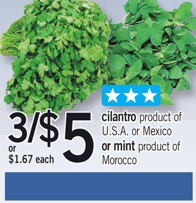 Cilantro Or Mint