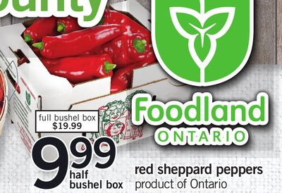 Red Sheppard Peppers - Half Bushel Box