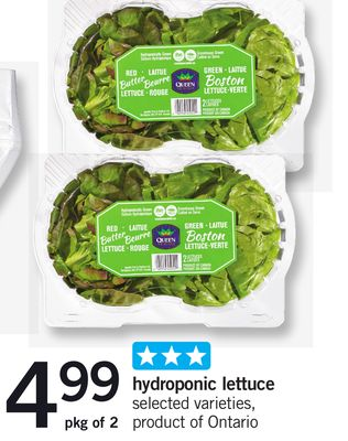 Hydroponic Lettuce - Pkg of 2