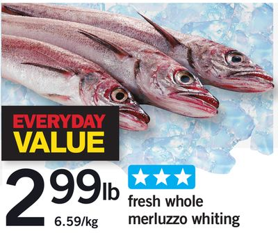 Fresh Whole Merluzzo Whiting