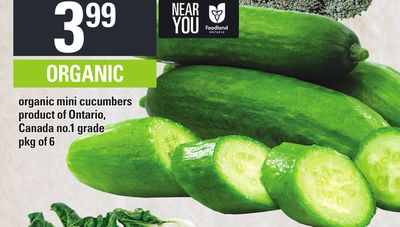Organic Mini Cucumbers - Pkg of 6