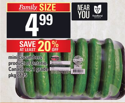 Mini Cucumbers - Pkg of 15
